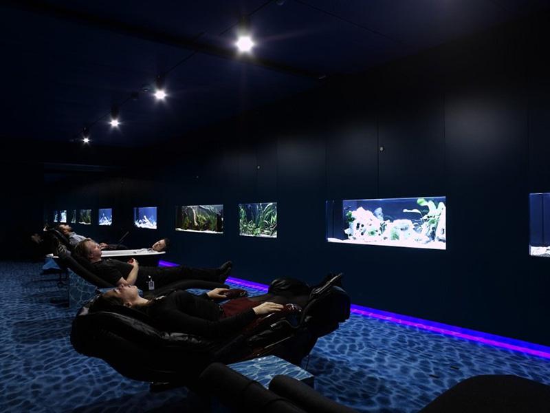 google zürih akvaryum odası