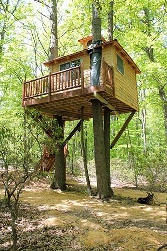 tropikal ağaç ev