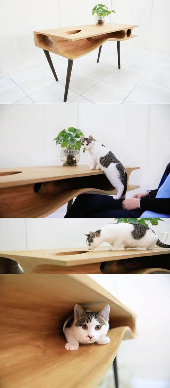 kedi masası