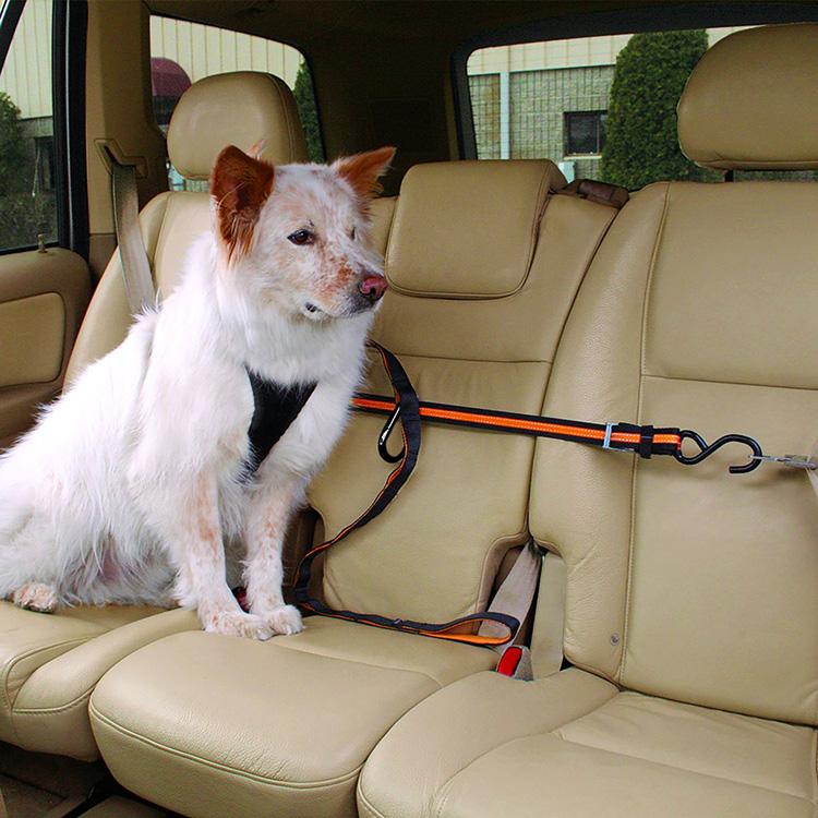 Araba için köpek güvenliği