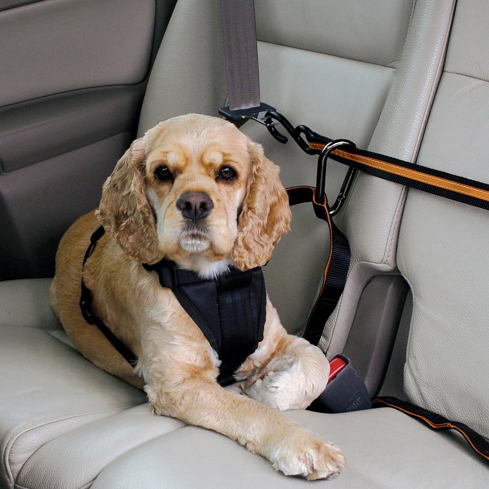 Köpek aslılıkları araba için