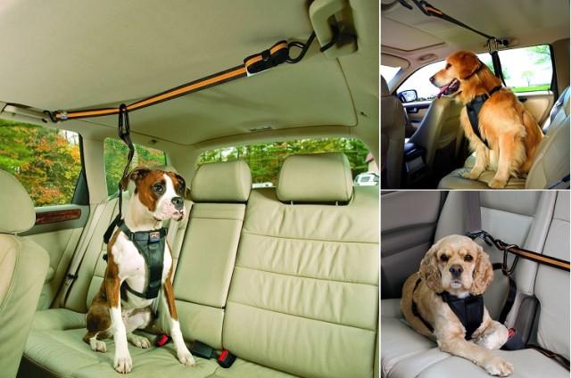 Köpekler için araba askılığı