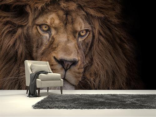 Aslan duvar kağıdı