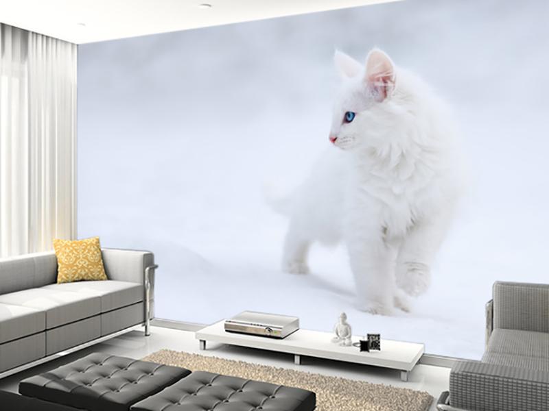 Eviniz için kedi duvar kağıdı