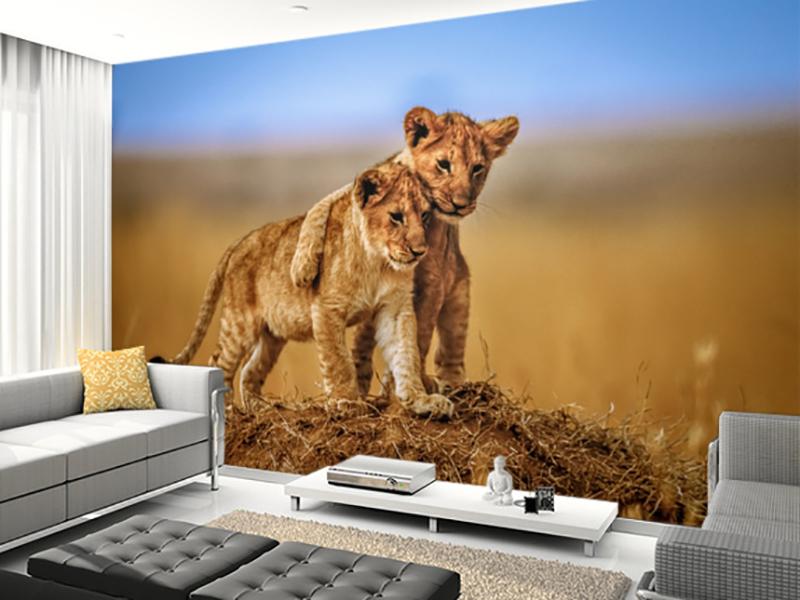 Eviniz için yavru aslanlar duvar kağıdı