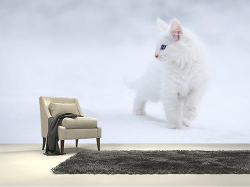 Kedi duvar kağıdı