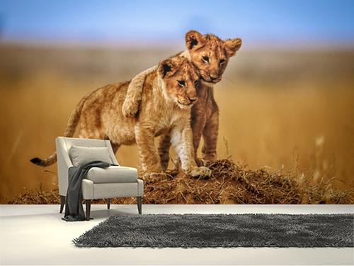 Yavru aslanlar duvar kağıdı