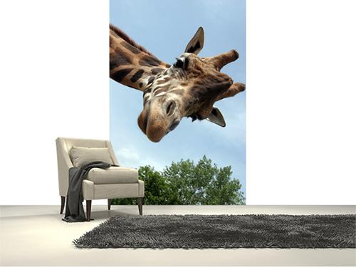 Zürafa duvar kağıdı