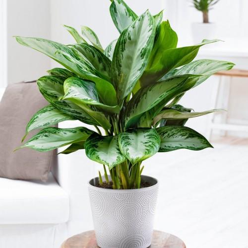 Yatak Odaları İçin Canlı Bitkiler