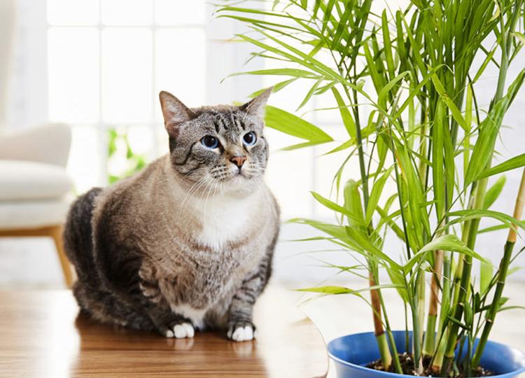 Kedi ve Köpekleriniz için Güvenli Bitkiler