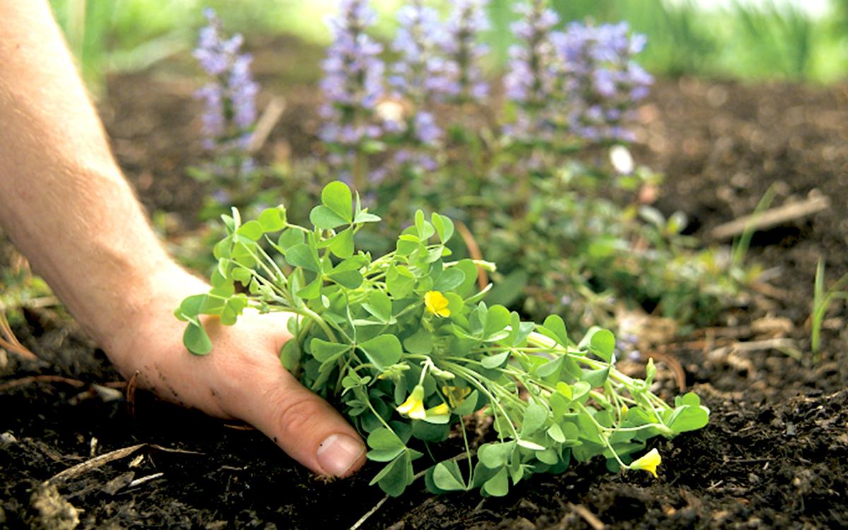 Yaz mevsimi iyice yerleştikçe ve bitkiler, sebze ve çiçekler için daha az uygun koşullar oluştukça, yabani otların da fazlalaşma olasılığı artar.