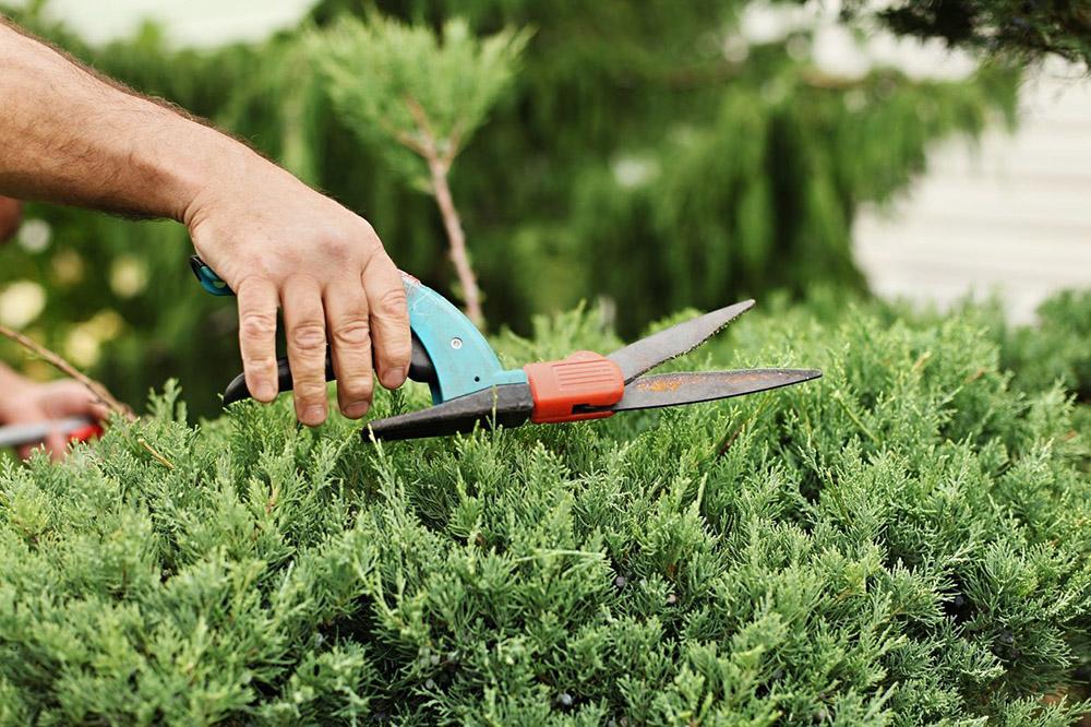 Şimdi yeni büyümeyi teşvik etmenin zamanı olmadığından, önümüzdeki soğuk aylarda başarılamayacak hiçbir şeyi göze almayın veya gübrelemeyin. Yaz Sonu Bahçede Yapılacak İşler Listesi