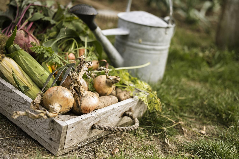 En sıcak ay boyunca bakıma ayak uydurmak, hem baharda bahçenizin sağlığının iyi olmasını hem de sonbaharda önünüzdeki bakım işlerinde kolaylıklar sağlayacaktır.