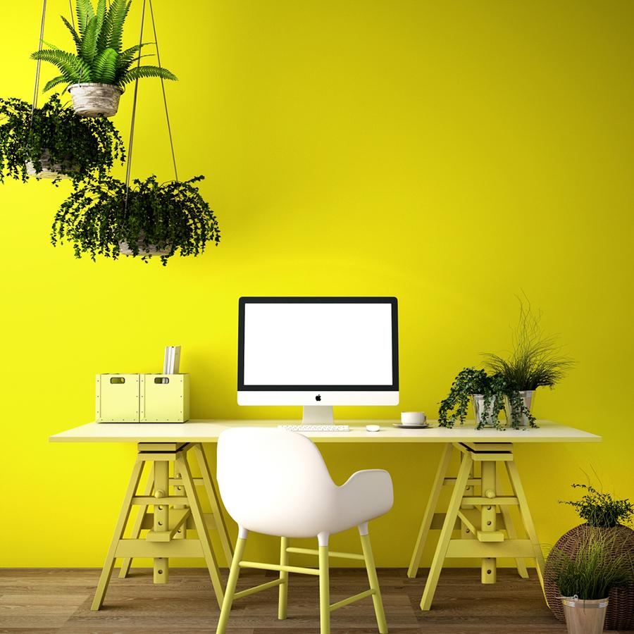 Sarı Renk Ofis Duvarı